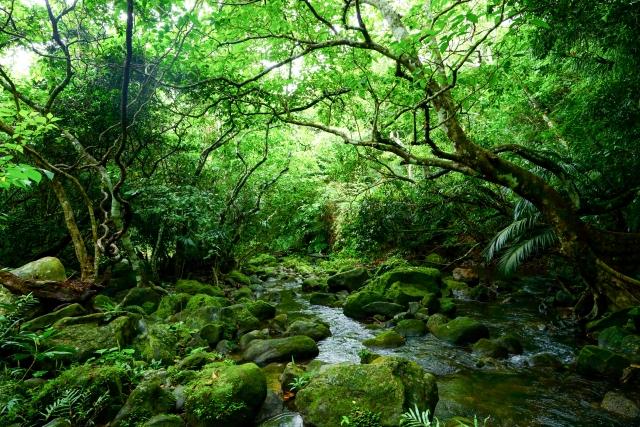 沖繩必去景點推薦,屋久島
