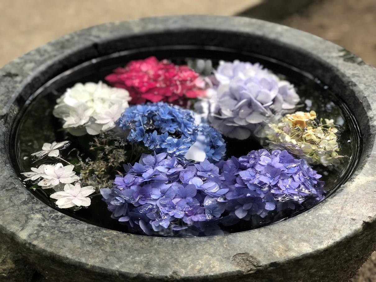 繡球花 福岡