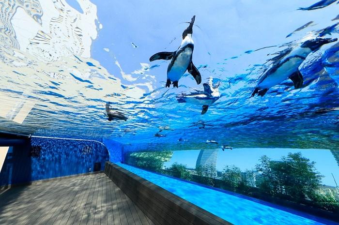 日本水族館 陽光水族館