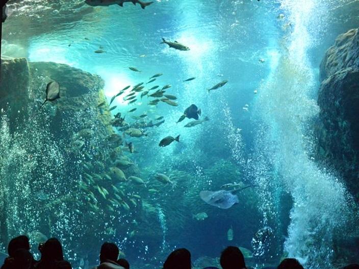 日本水族館 相模灣水槽