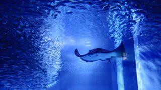八景島 水族館
