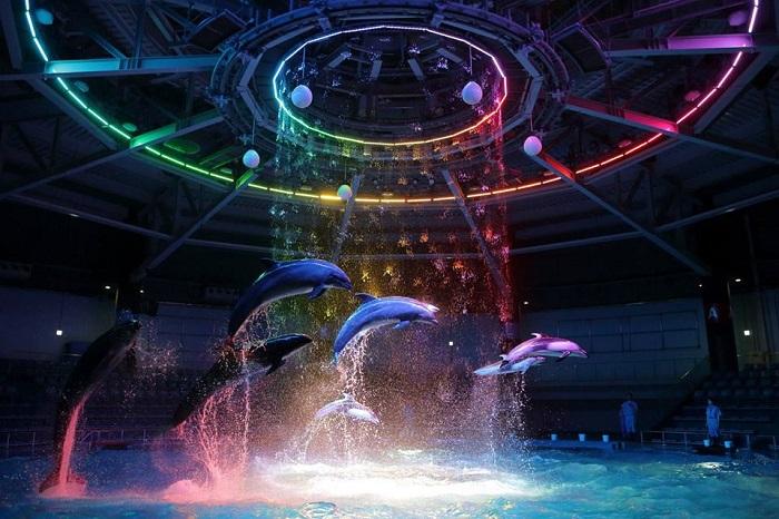 品川水族館 海豚表演