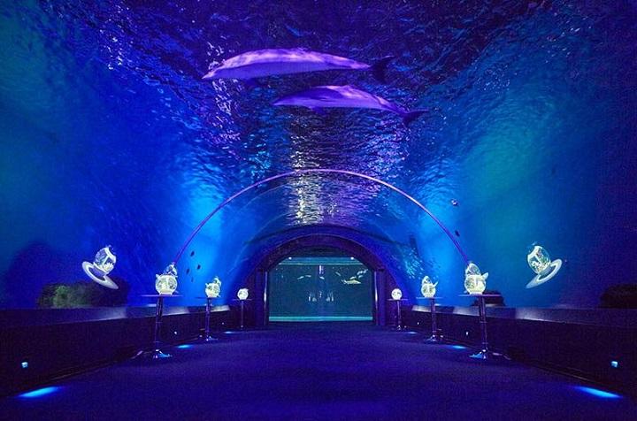 日本 水族館 海底隧道