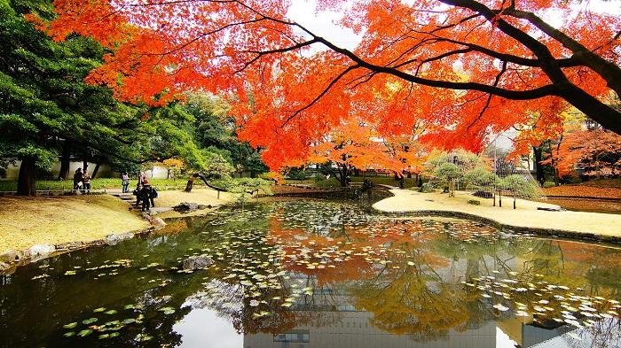 小石川後樂園楓葉