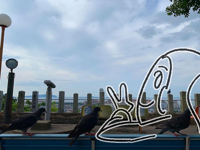 福岡鷲尾愛宕神社 鴿子