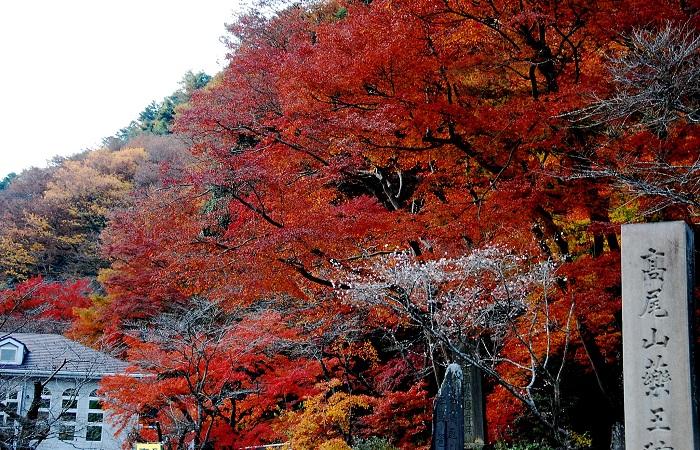 高尾山楓葉