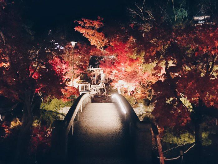 京都 楓葉 南禪寺永觀堂