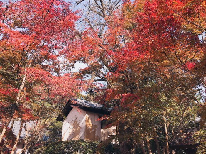 京都 楓葉 蓮華寺