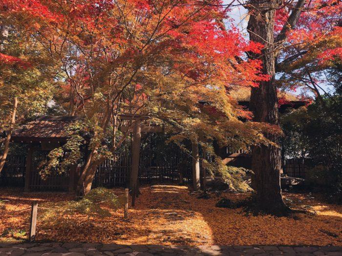 京都 楓葉