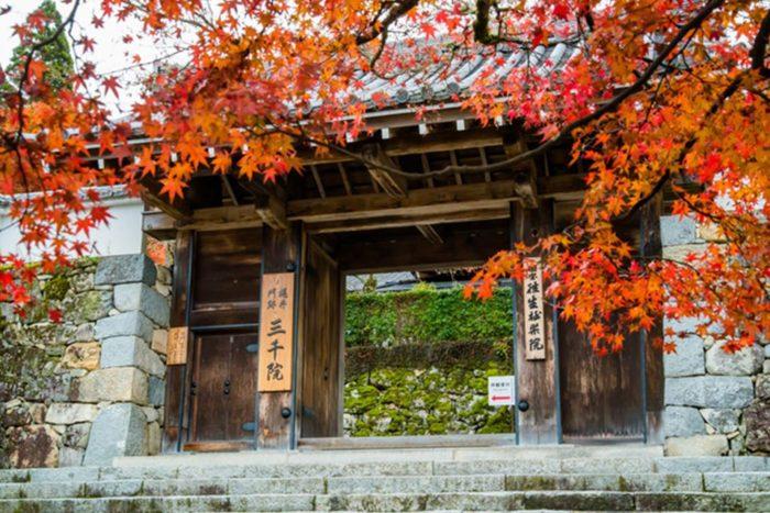 京都 楓葉 大原三千院