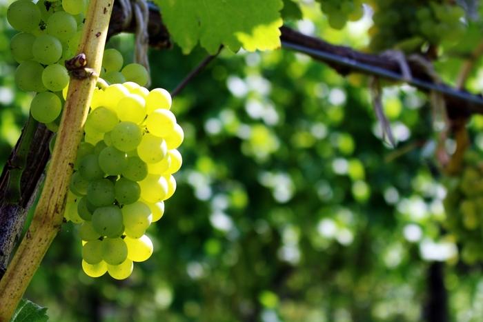 日本 葡萄酒