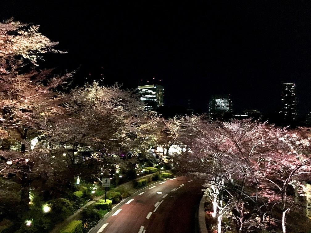 2020 六本木 賞夜櫻