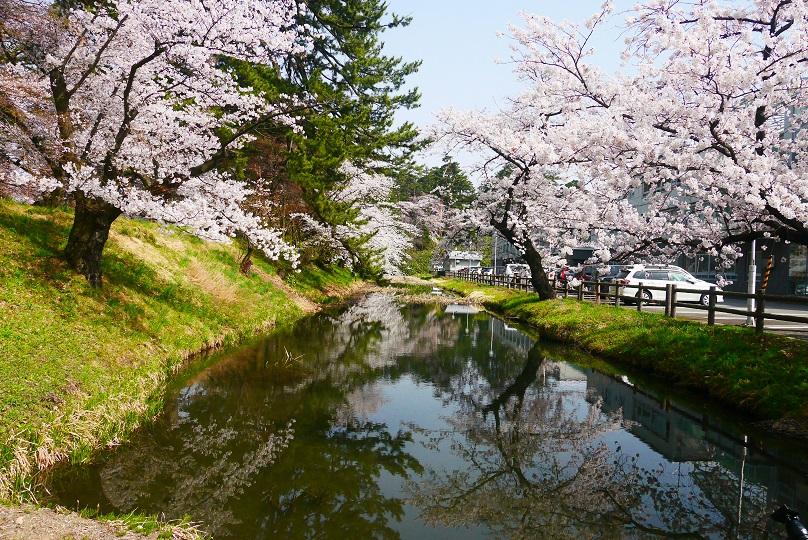 弘前公園 賞櫻
