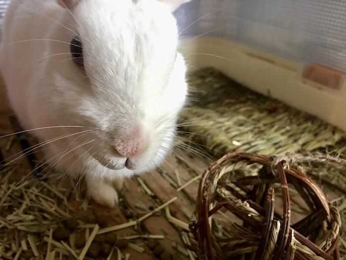兔子 日本 寵物用品