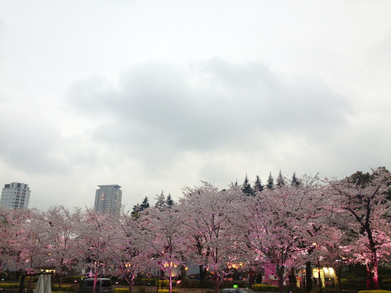 2020 六本木 賞櫻