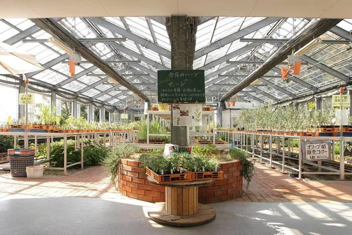 小豆島 橄欖公園